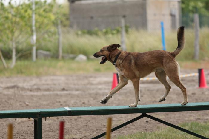 Verein der Hundeffreunde Loitz 022 (1280x853)