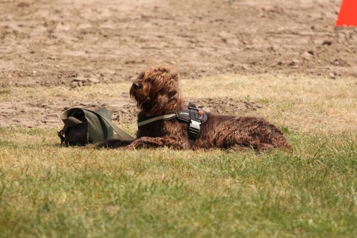 Verein der Hundeffreunde Loitz 051 (1280x853)