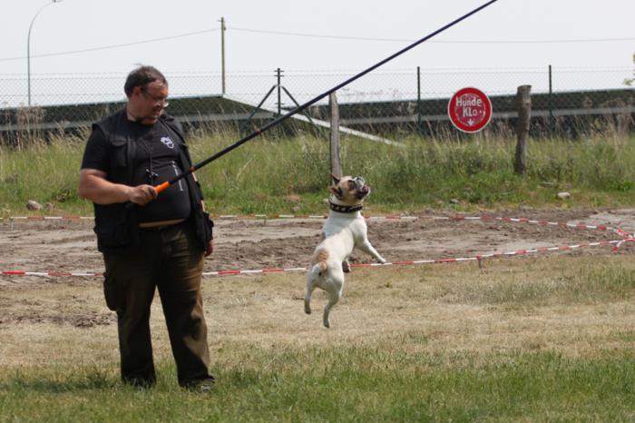 Verein der Hundeffreunde Loitz 132 (1280x853)