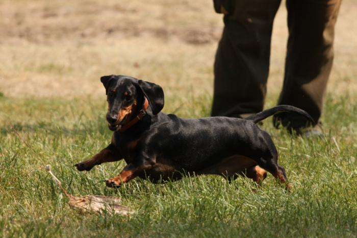 Verein der Hundeffreunde Loitz 147 (1280x853)