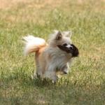 Verein der Hundeffreunde Loitz 081 (1280x853)