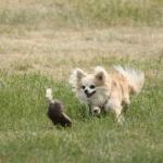 Verein der Hundeffreunde Loitz 084 (1280x853)