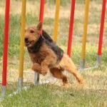 Verein der Hundeffreunde Loitz 162 (1280x852)